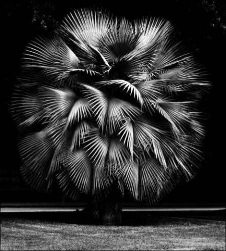 Geert Goiris, Trop, 2013. Framed archival pigment print. 148 x 200 cm.<br><br>Courtesy galerie Art:Concept, Paris