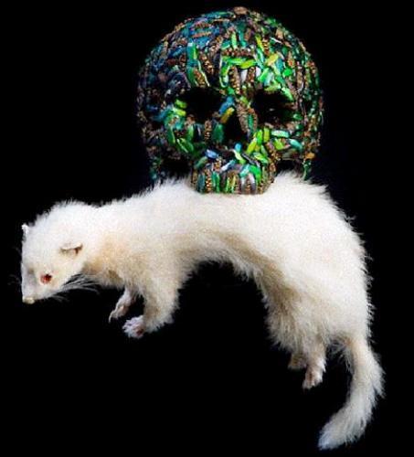 Jan Fabre, Skull (Ferret), 2001. Crâne synthétique, coléoptères, animal empaillé