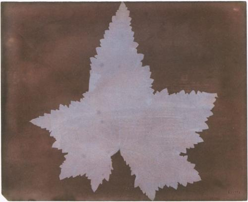 William Henry Fox Talbot, Feuille de vigne, 1839. Dessin photogénique. 18,7 x 23 cm. Courtesy Bibliothèque nationale de France.