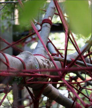 Red Garden, Christophe Gautrand