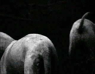 Molosses, vidéo, Anne-Charlotte Finel
